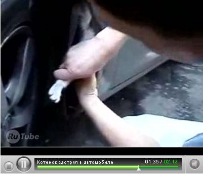 котенок застрял в корпусе автомобиля