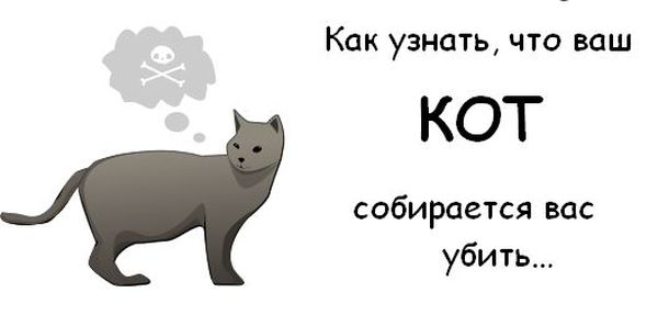 Как узнать, что ваш кот собирается вас убить?